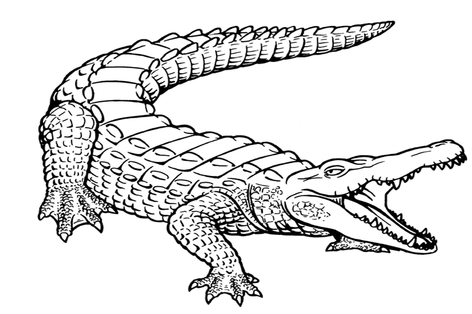 alligator coloring pages,printable,coloring pages