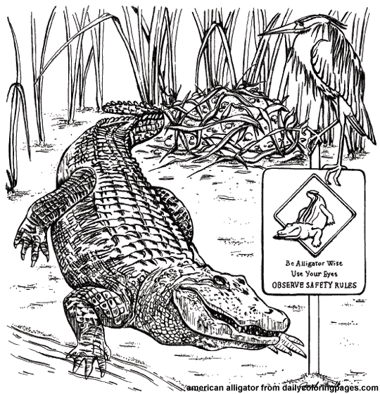 Alligator Coloring Pages 11printablecoloring