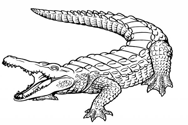 printable alligator coloring pages,printable,coloring pages