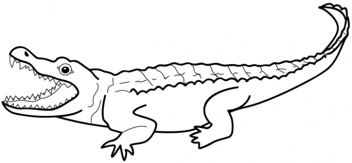 printable pictures of alligator pageprintablecoloring pages