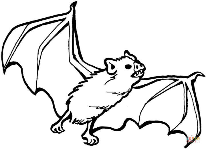 bat coloring pages 13,printable,coloring pages