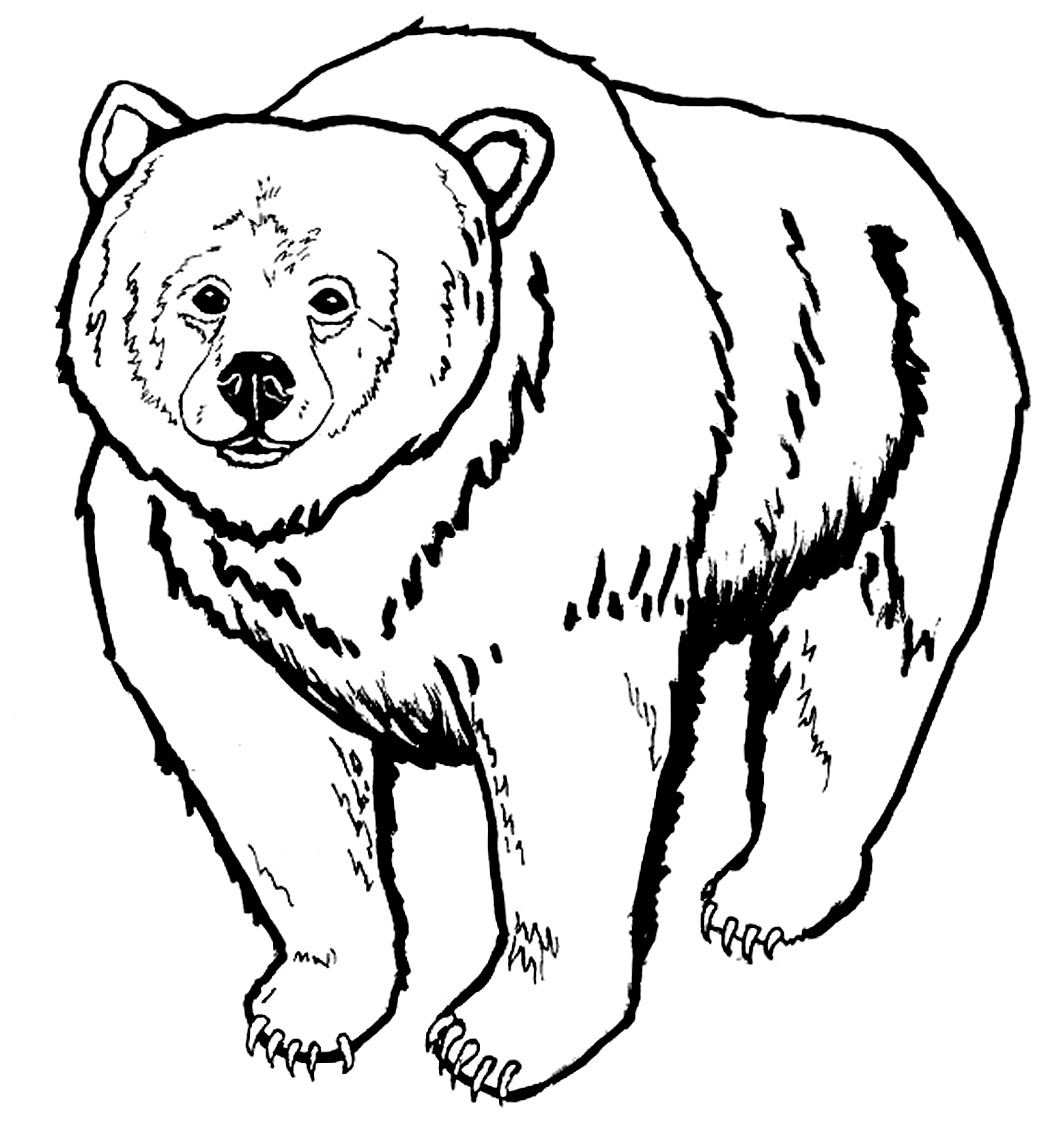 Polar animals coloring pages for kids - Bear Coloring Pages