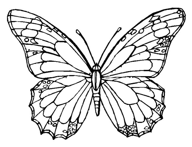 colors of nature 21 butterfly coloring pages and pictures print color craft