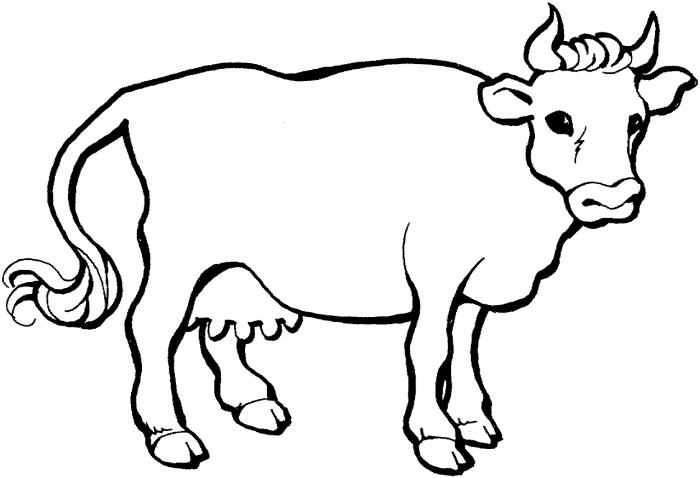 coloring pictures cow,printable,coloring pages