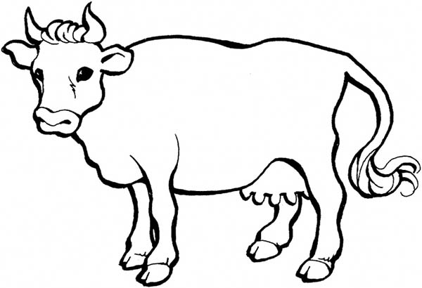 cow coloring pages 12,printable,coloring pages
