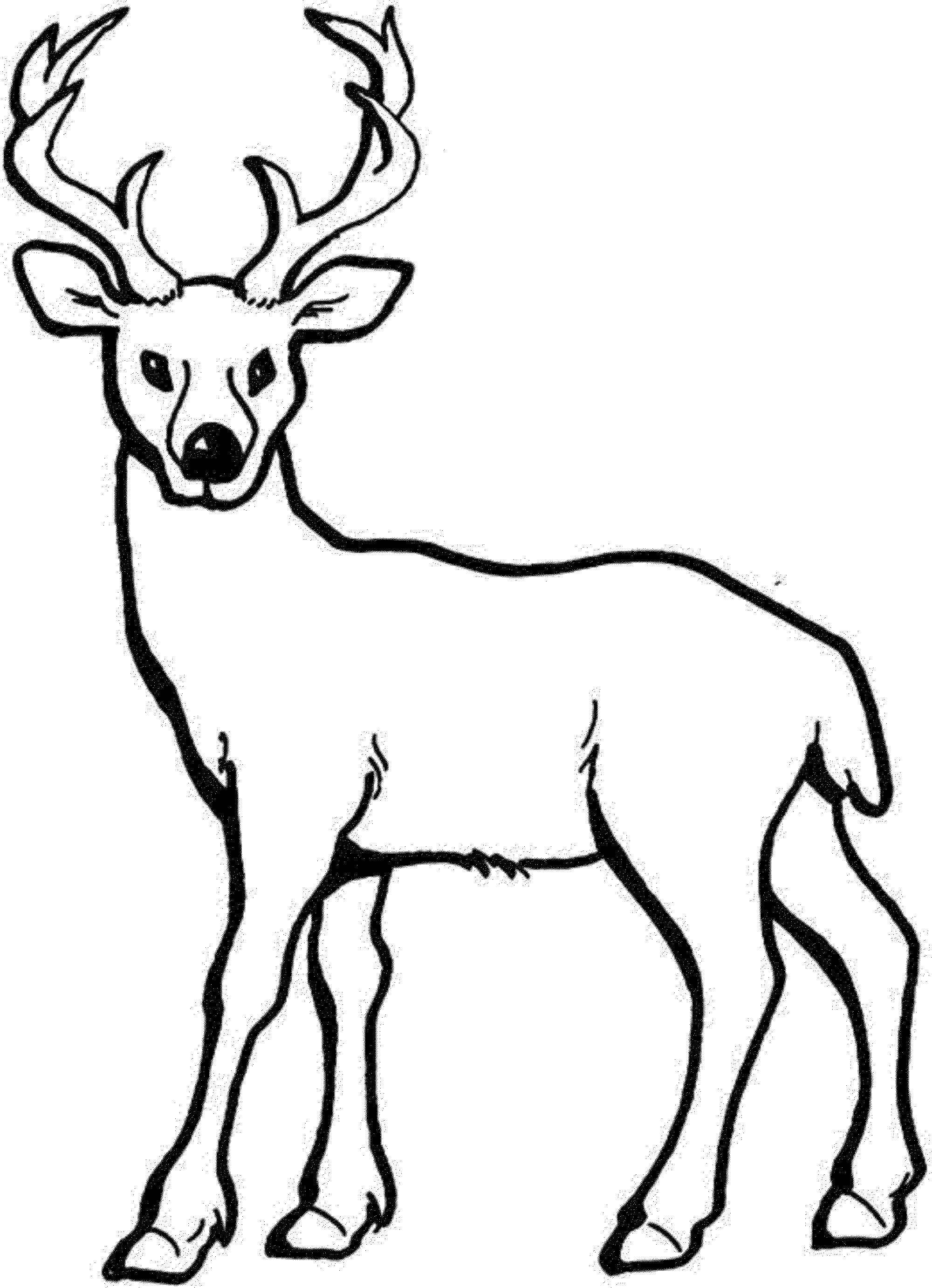 coloring pictures deer,printable,coloring pages