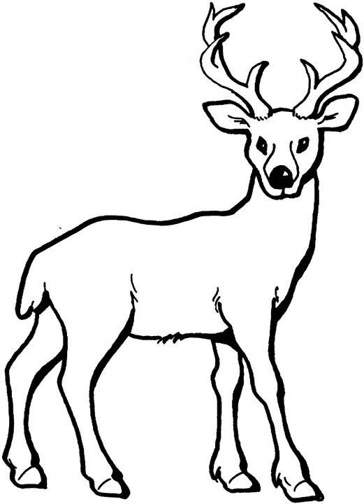 printable deer coloring pages,printable,coloring pages