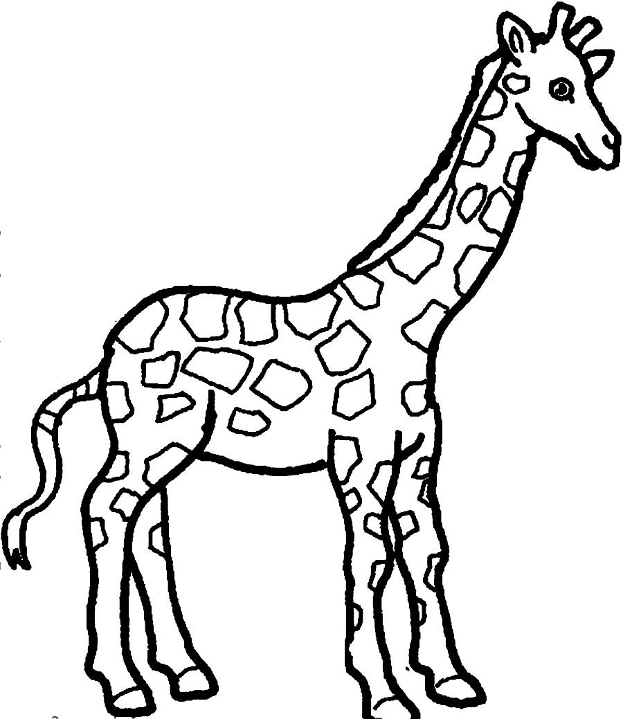 coloring pictures giraffe,printable,coloring pages