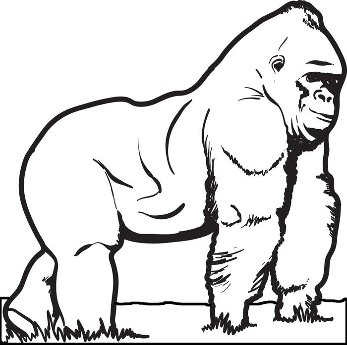 gorilla coloring page,printable,coloring pages