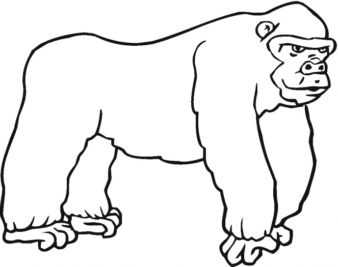 gorilla coloring pages 11,printable,coloring pages
