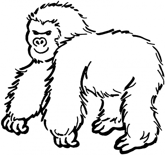 Gorilla Coloring Pages For Kidsprintablecoloring