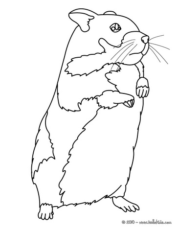 hamster coloring pages 13,printable,coloring pages