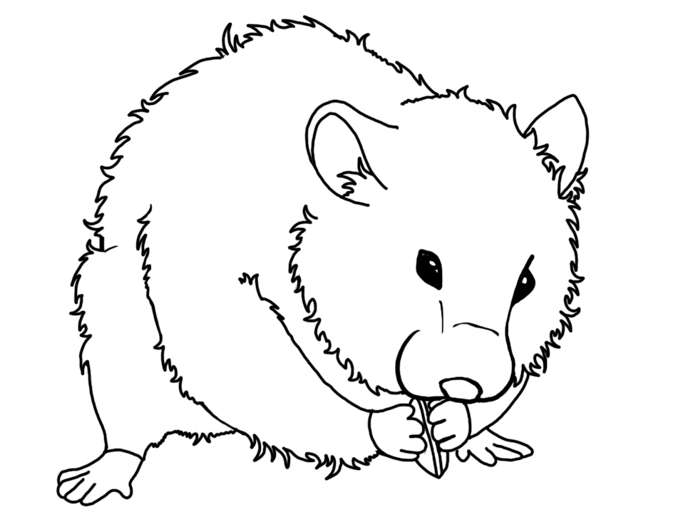 printable hamster coloring pages,printable,coloring pages