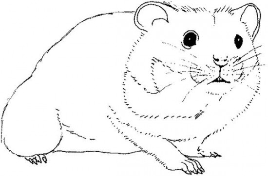 14 hamster coloring pages printable print color craft