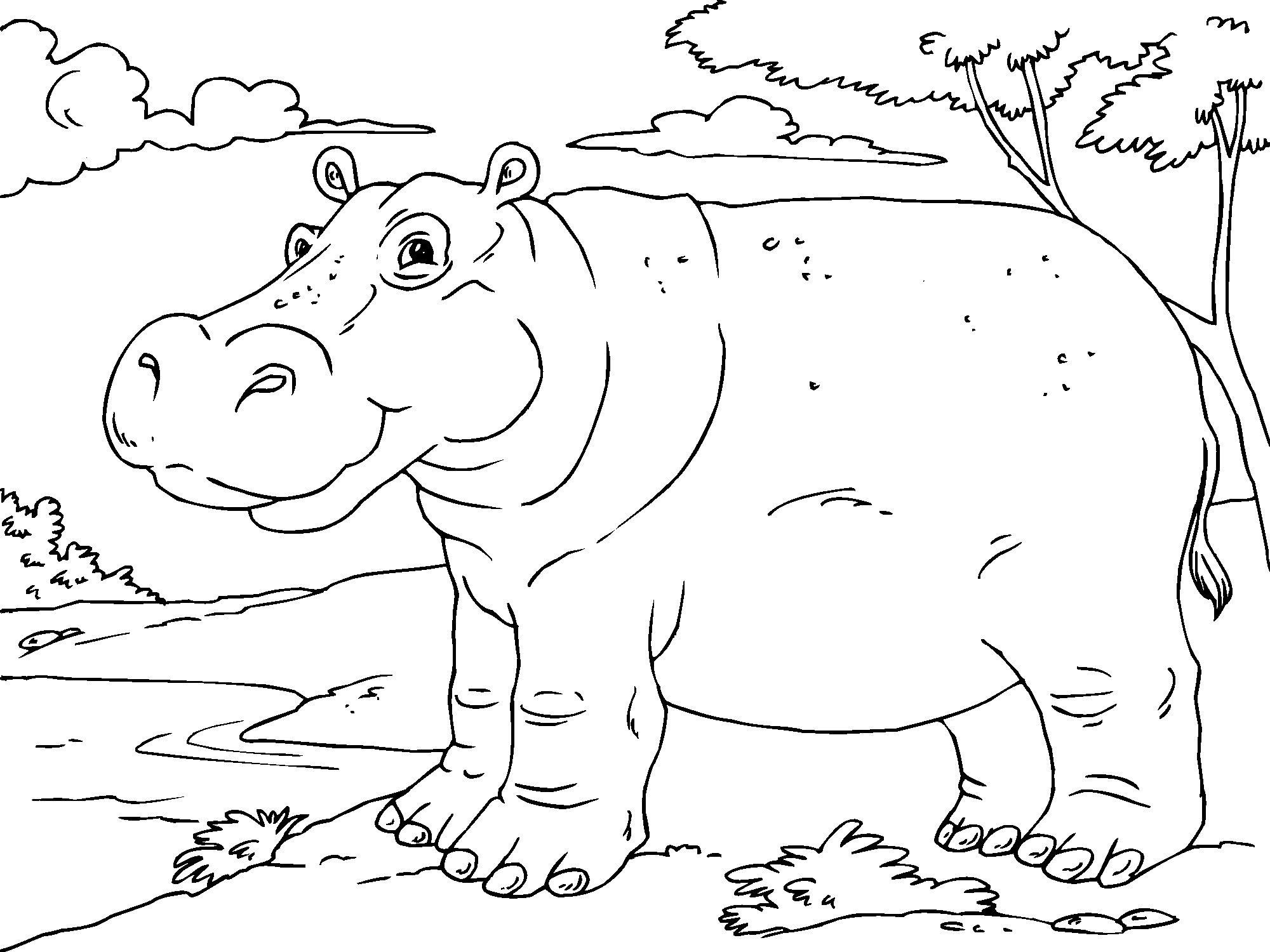 printable pictures of hippo page,printable,coloring pages