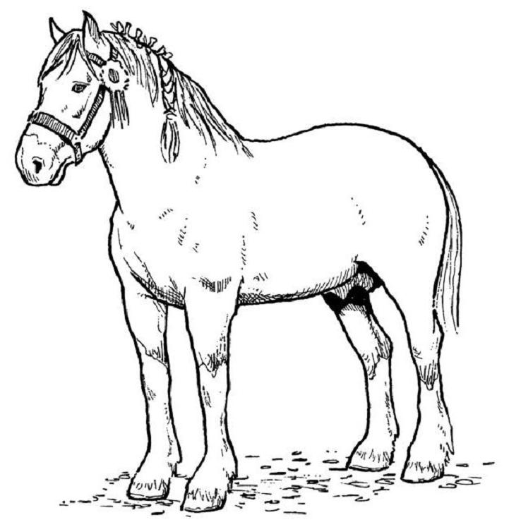 kids coloring pages horse,printable,coloring pages