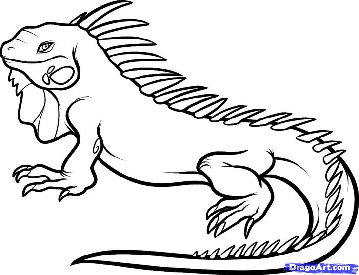coloring pages of iguana,printable,coloring pages