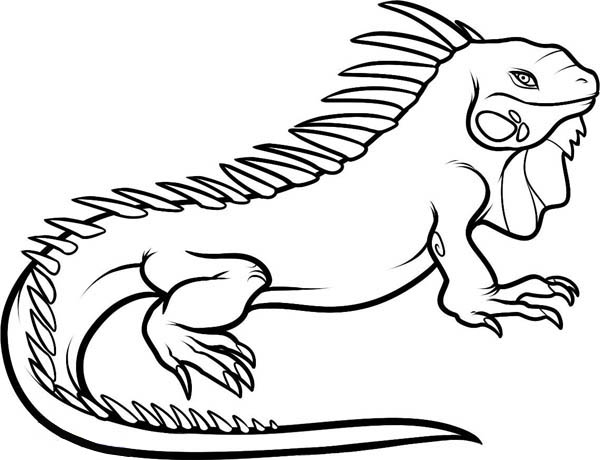 iguana coloring pages,printable,coloring pages