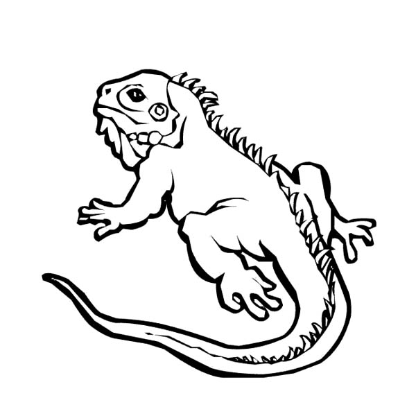 16 Printable Pictures Of Iguana Page Print Color Craft Iguana Coloring Page