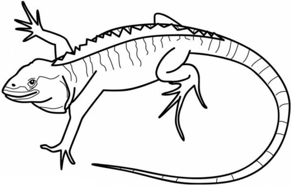 Iguana Coloring Pages