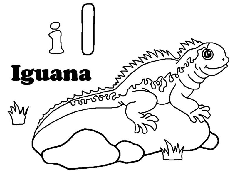 iguana coloring pages for kids,printable,coloring pages