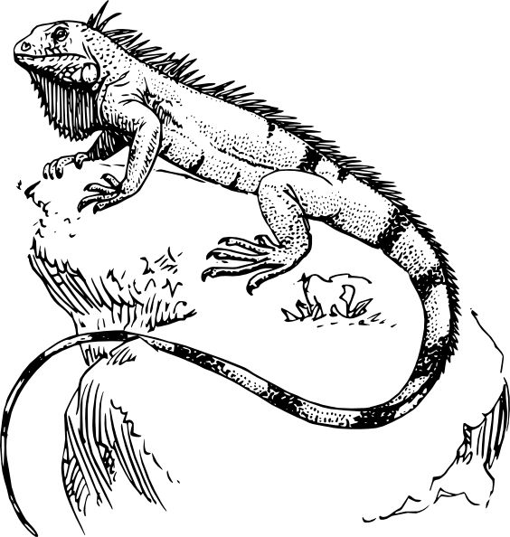 printable pictures of iguana page,printable,coloring pages