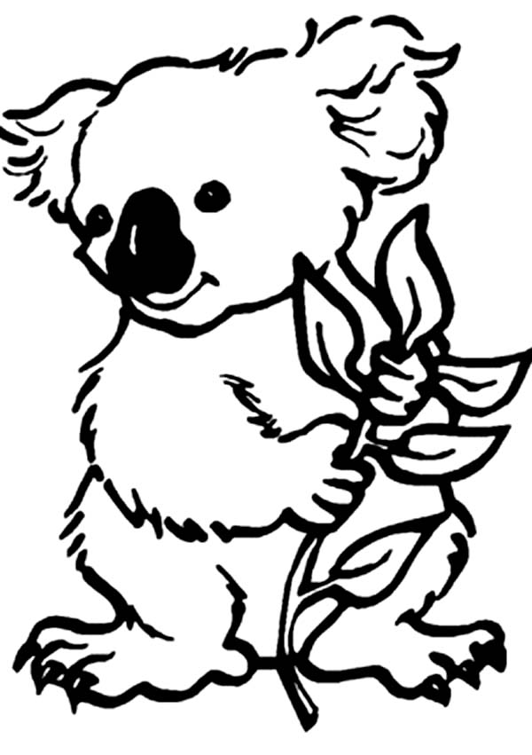 koala coloring pages for kids,printable,coloring pages
