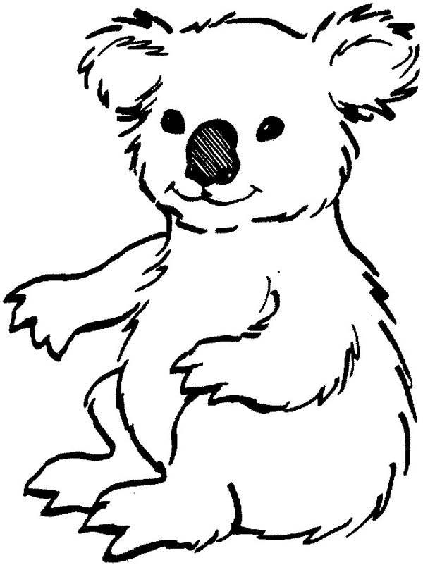 koala coloring pages printable,printable,coloring pages