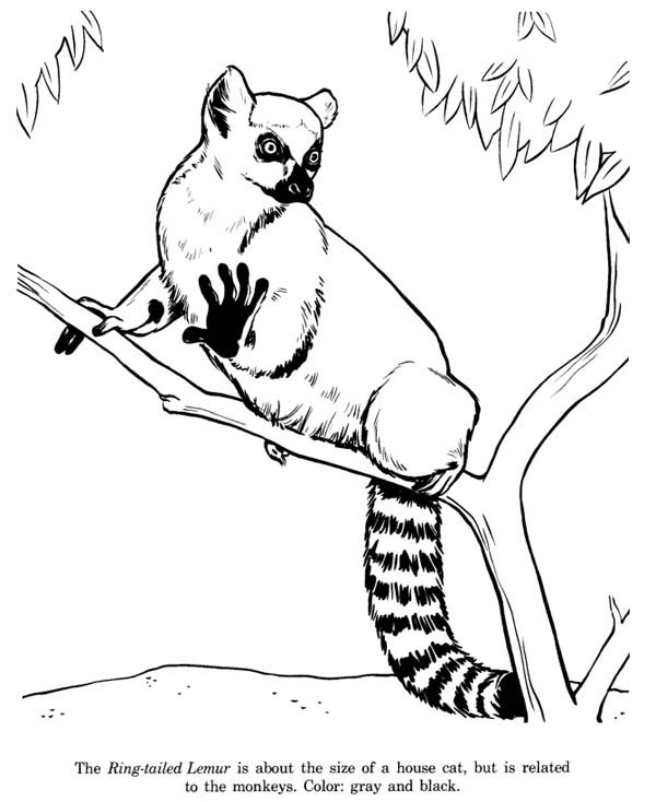 kids coloring pages lemur,printable,coloring pages