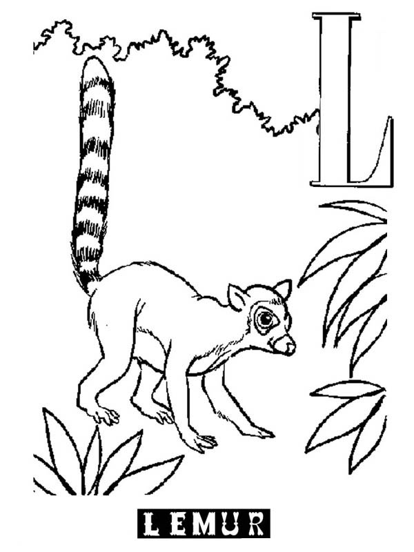 printable pictures of lemur page,printable,coloring pages