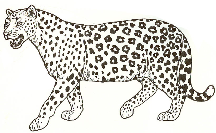 leopard coloring pages,printable,coloring pages