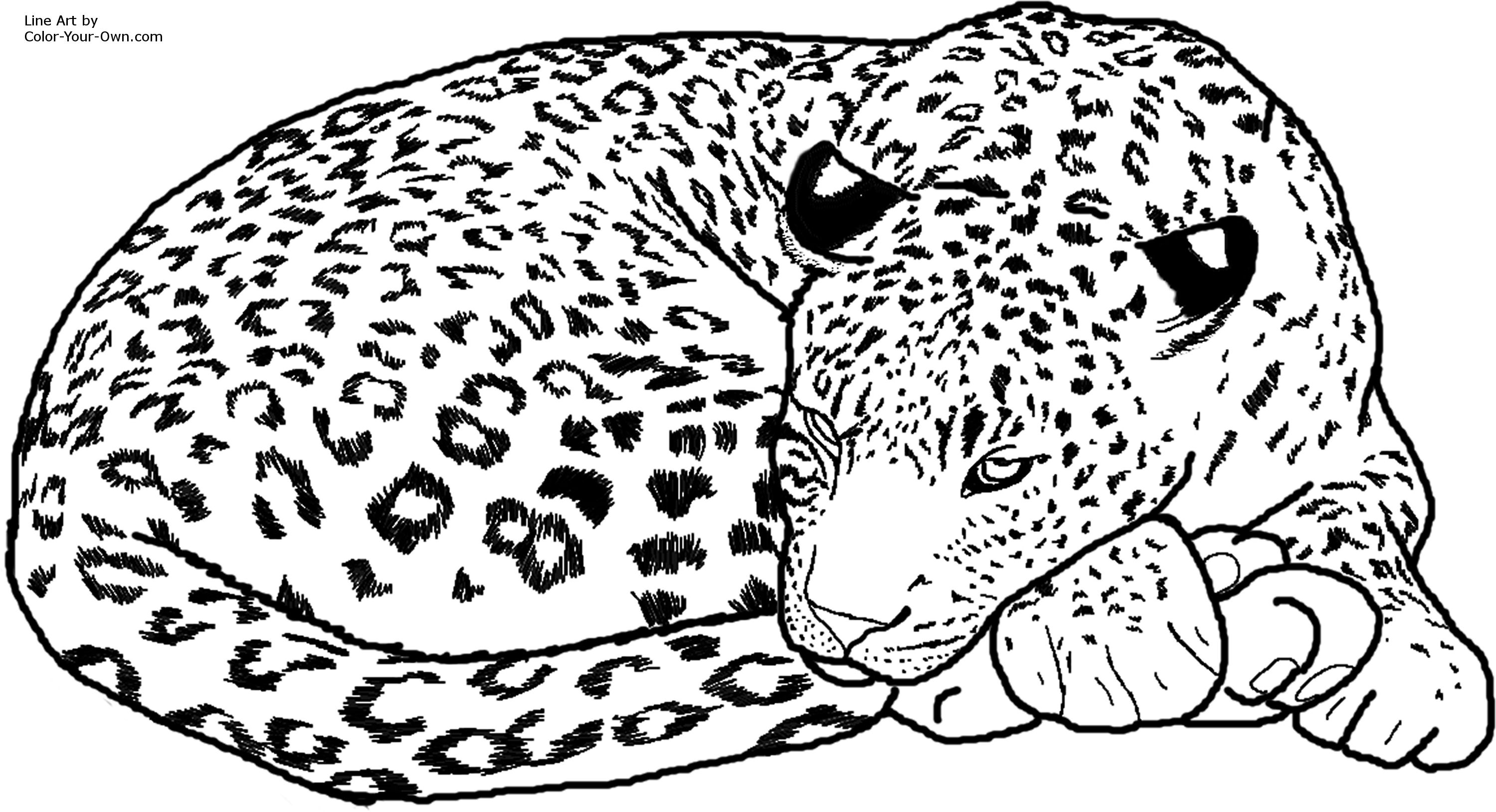 printable leopard coloring pages,printable,coloring pages