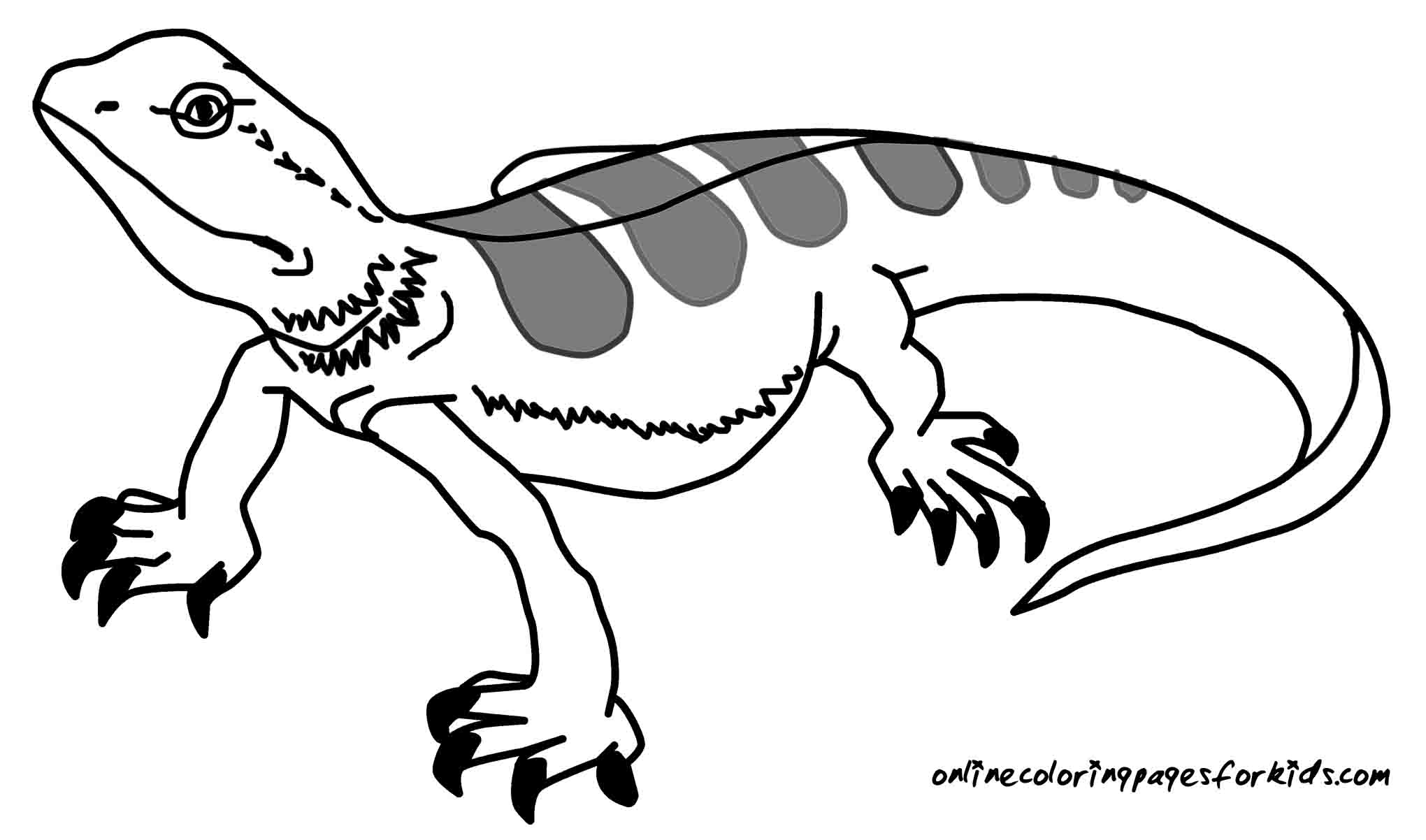 Lizards coloring pages to print - Lizard Coloring Pages Printable Printable Coloring Pages
