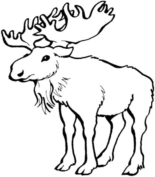 coloring pages of canadian animals - photo#8