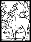 moose coloring pages 11,printable,coloring pages