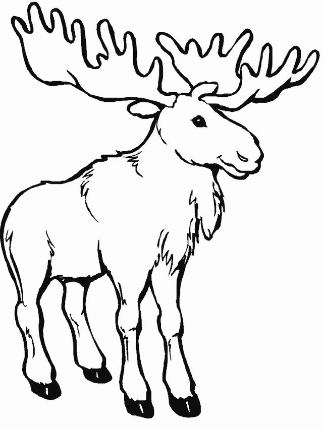 moose coloring pages 13,printable,coloring pages