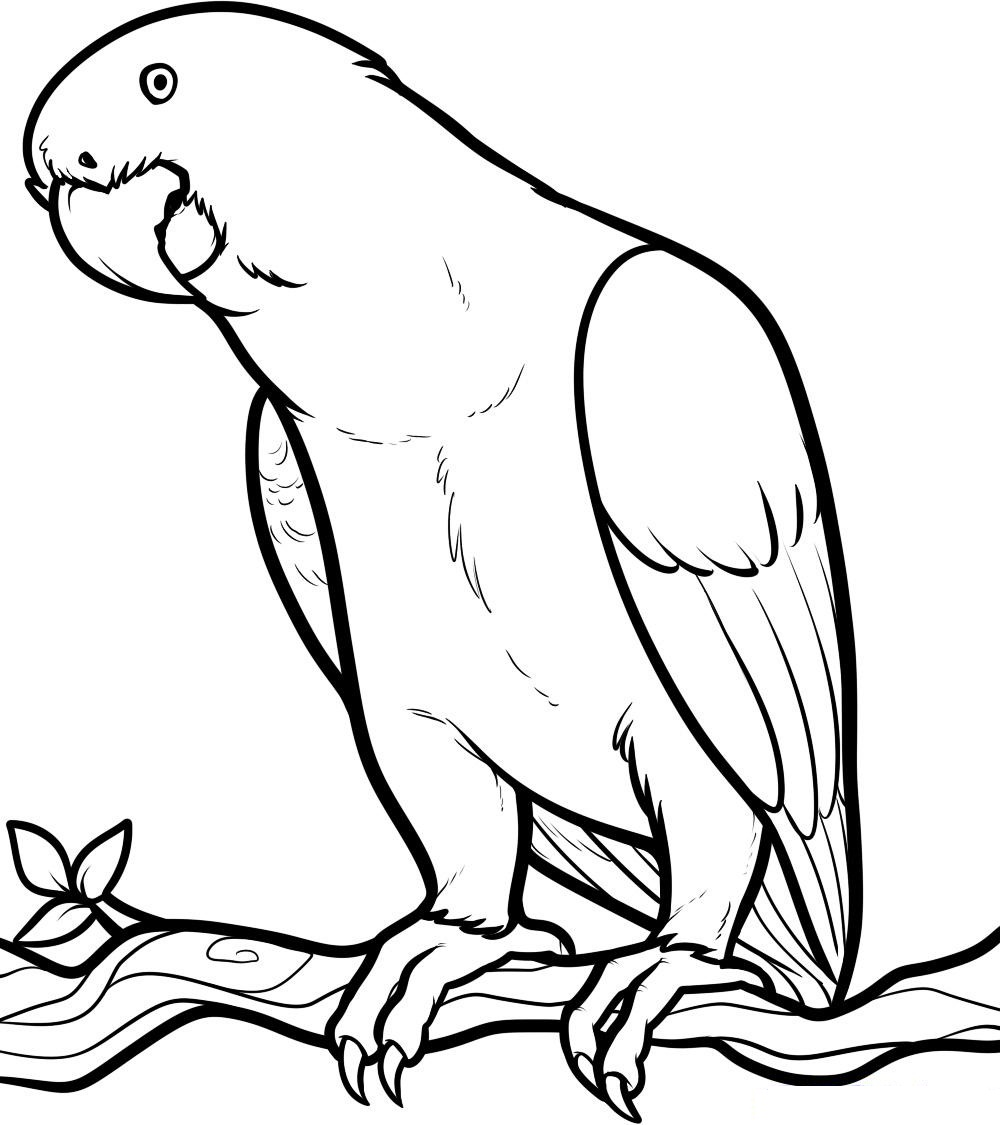 coloring pictures parrot,printable,coloring pages