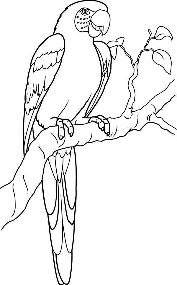 kids coloring pages parrot,printable,coloring pages
