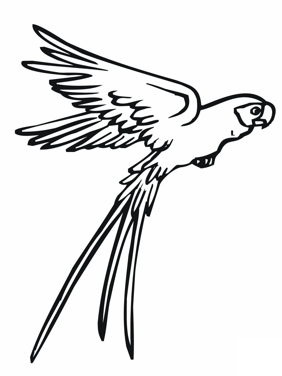 Parrot Coloring Pages 11printablecoloring