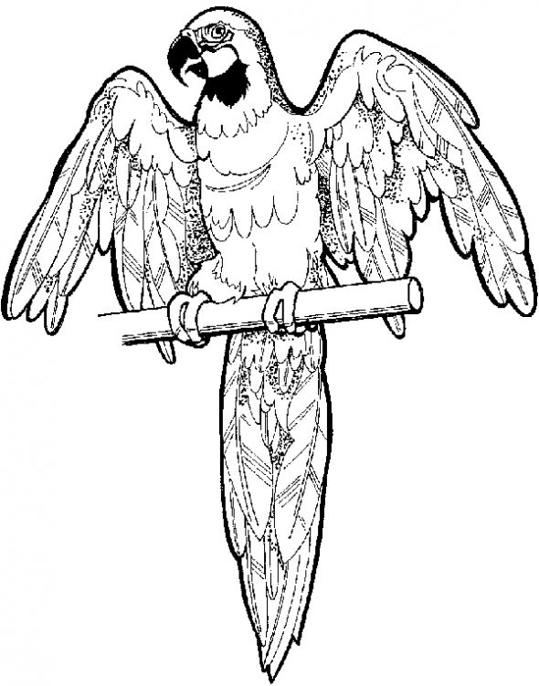 Parrot Coloring Pages 13,printable,coloring Pages
