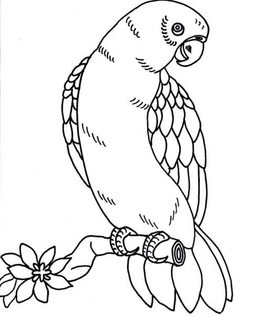 printable pictures of parrot page,printable,coloring pages