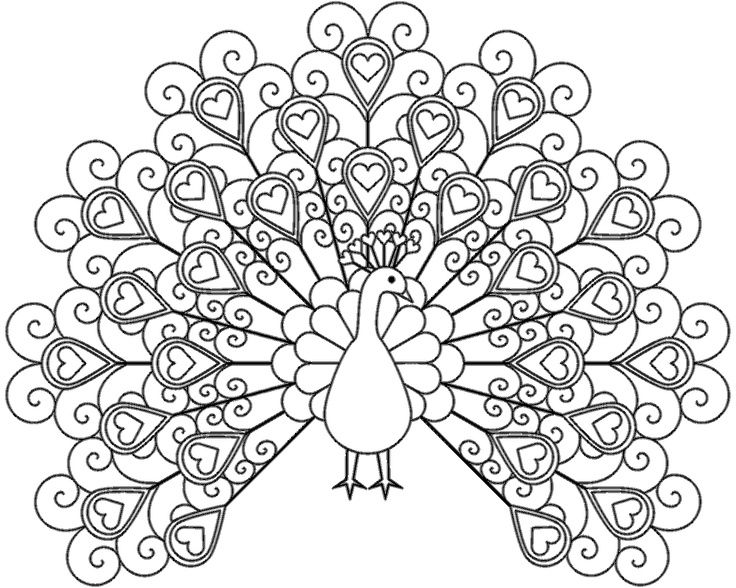 coloring pages of peacock,printable,coloring pages