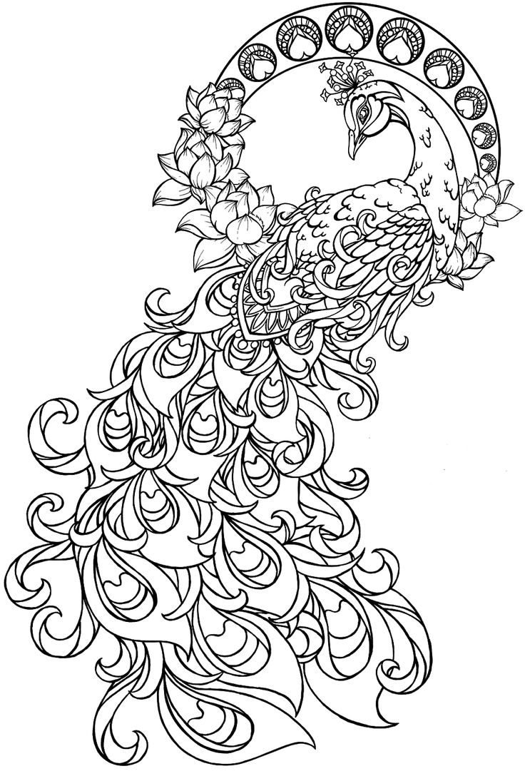printable peacock coloring pages,printable,coloring pages