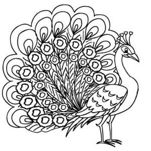 printable pictures of peacock page,printable,coloring pages