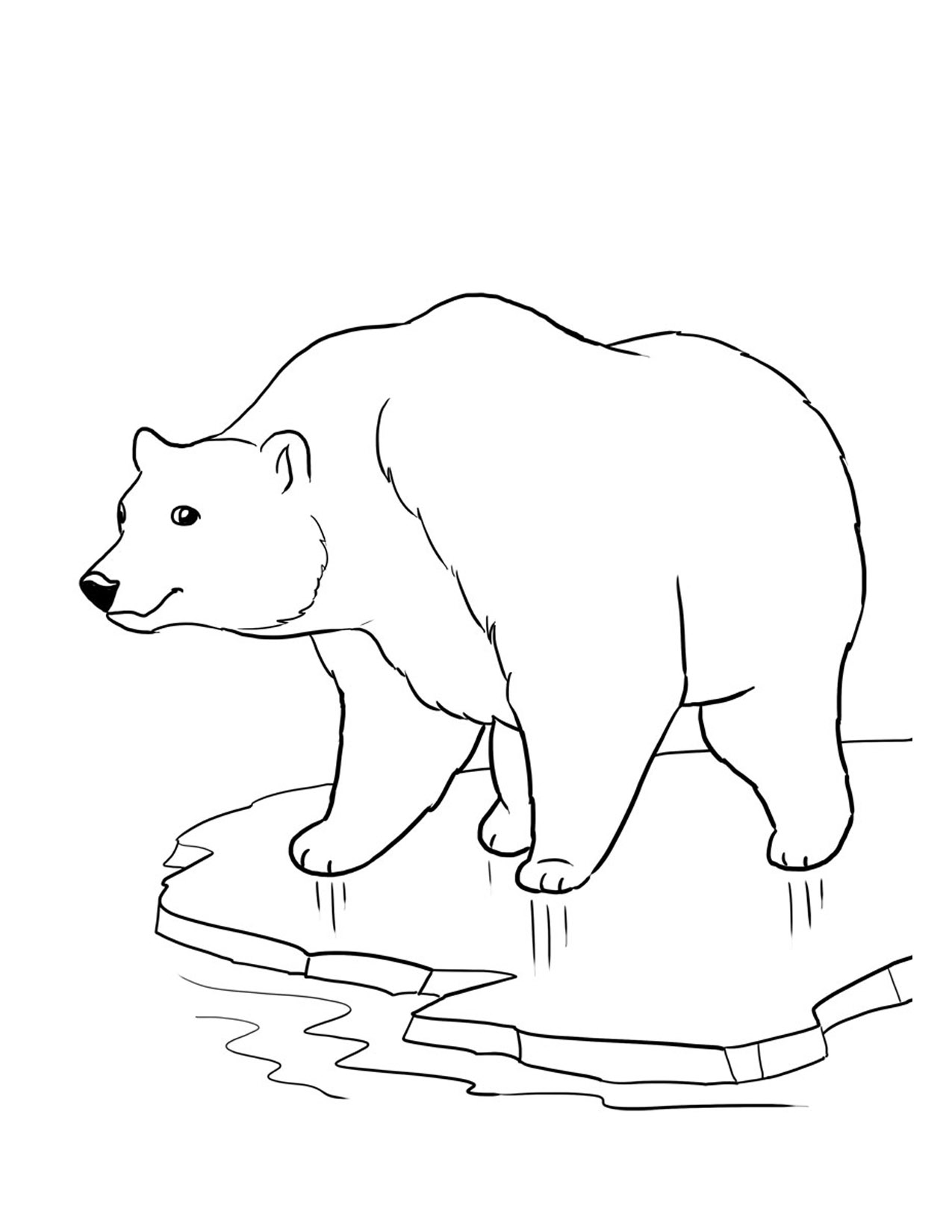 fluffy fur balls bear coloring pages 37 pictures and cliparts