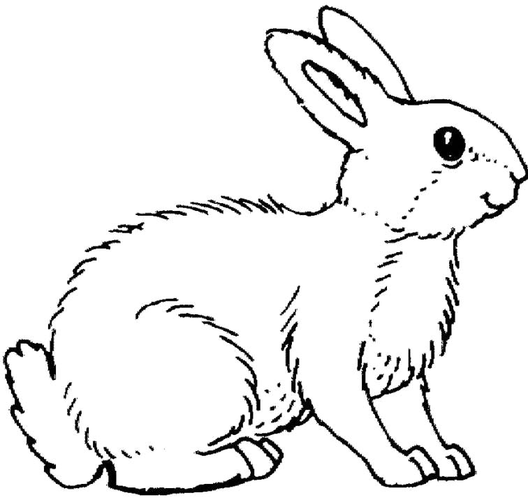 coloring pages of rabbit,printable,coloring pages