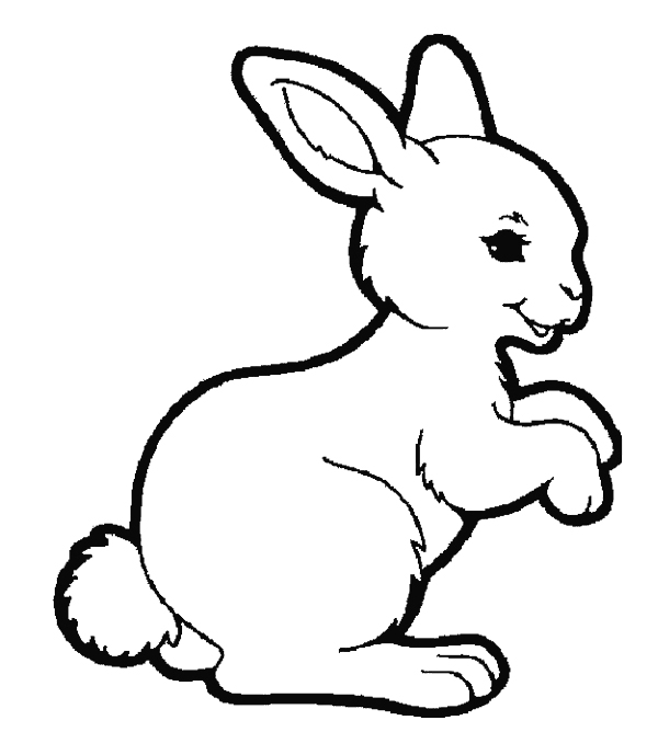 rabbit coloring page,printable,coloring pages