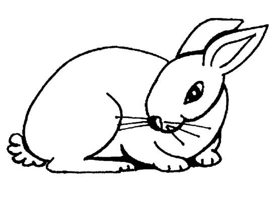 rabbit coloring page to print,printable,coloring pages