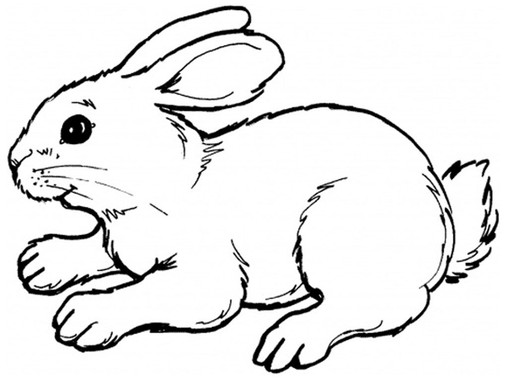 rabbit coloring pages,printable,coloring pages