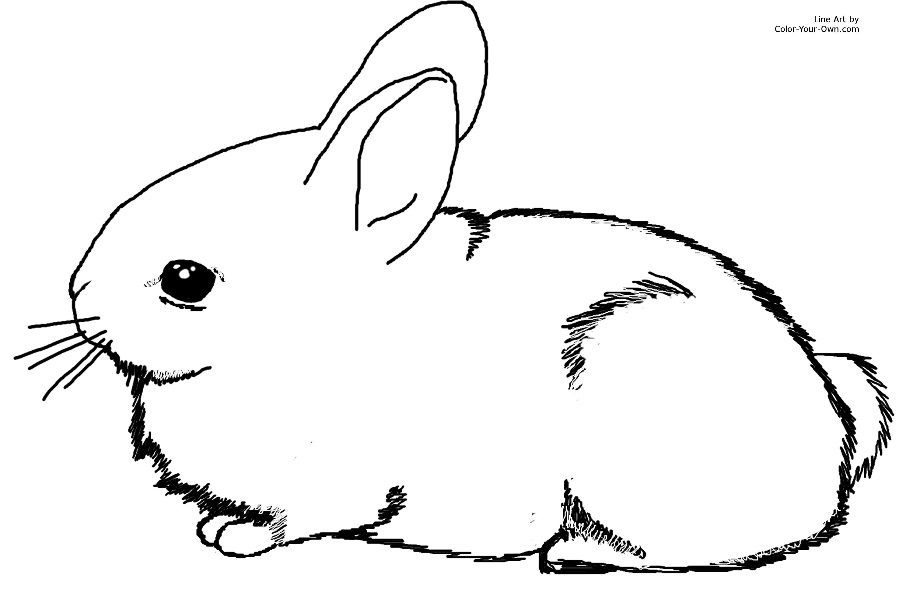 rabbit coloring pages 11,printable,coloring pages